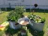 campiou-garden-summer-20200702_132120