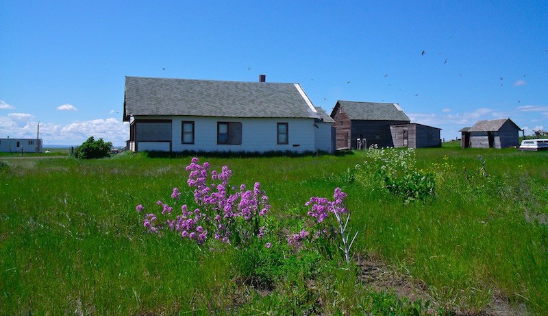 flowers-and-micey-house