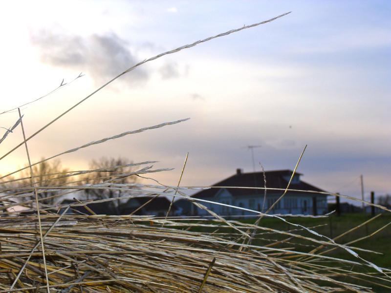 hay-and-house-ingomar