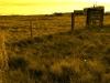 ingomar-hay