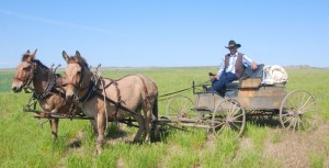 The Ingomar Wagon Train - Owen Badgett with His Buggy