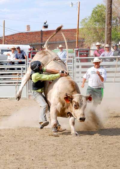 Bull-ride Ingomar Montana