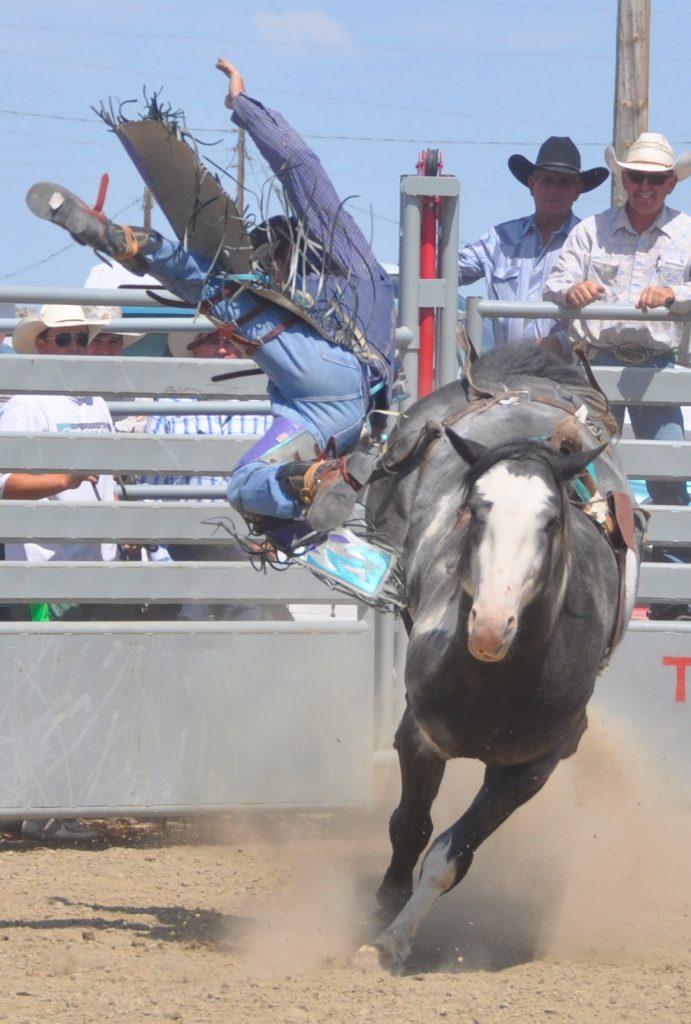 Ingomar Rodeo 2015 Cowboy bucked off bronc