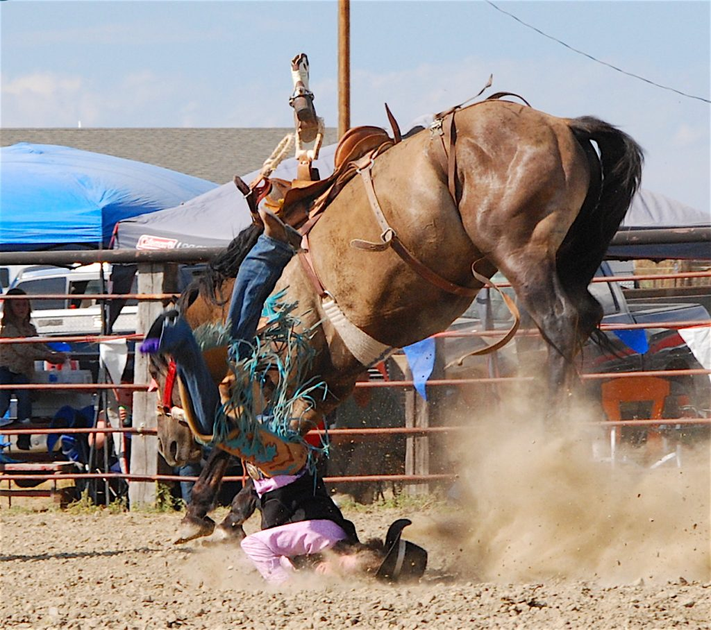 Bucking bronc Ingomar Rodeo 2016